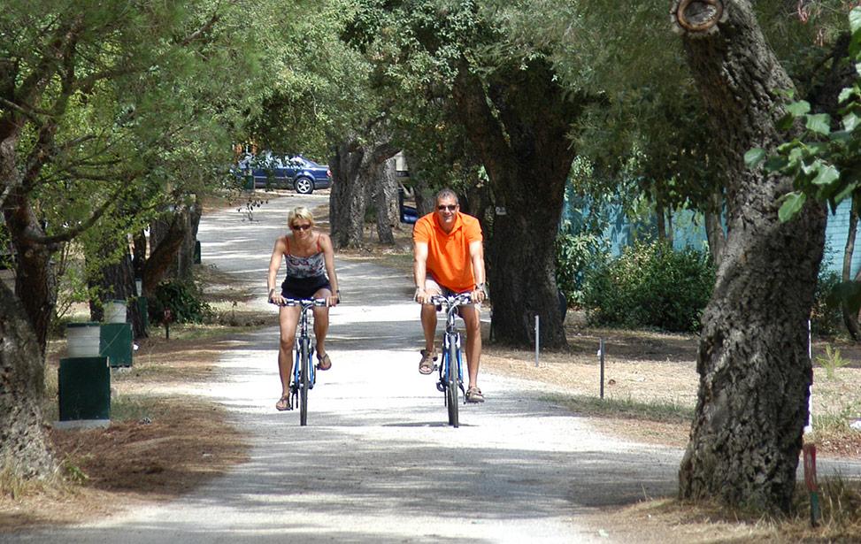 Leje af cykler